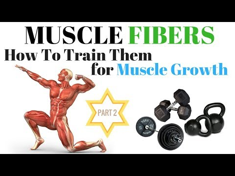 Train Muscle Fibers for GROWTH: Part Two