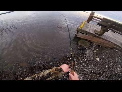 Steelhead/walleye fishing 4/11/17