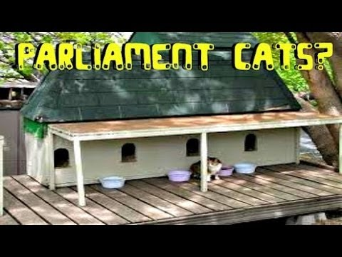 PARLIAMENT CATS?? AND CRAZY STAIRS!!