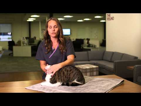 Easy Way to Pill Your Cat | Pets Plus Us Tips and Tricks