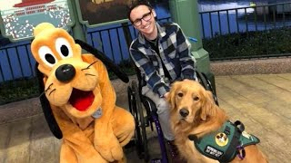 Golden Retriever Service Dog Meeting Disney