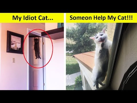 Idiot Cats That Will Make You Laugh Out Loud