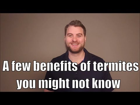 A few benefits of termites you might not know