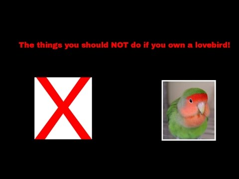 The things you should NOT do if you own a lovebird!