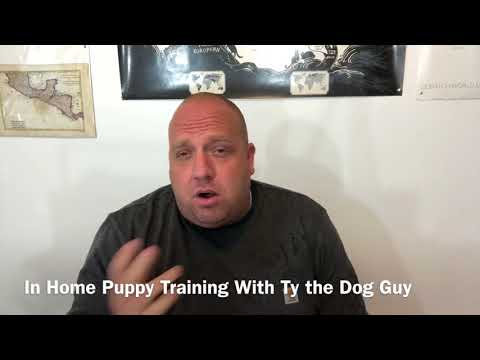 In Home Puppy Training- Utah Puppy Training