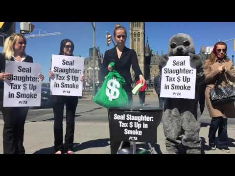 PETA Seal Slaughter Tax Waste Protest at Parliament Hill