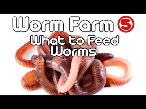 Worm Farm 5 - (What to feed Worms)