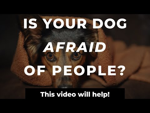 How To Stop A Dog's Fear Of Strangers  | Training A Fearful Dog