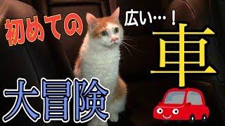 Download 猫を初めて車の中に解き放ったら大冒険が始まったwww Video