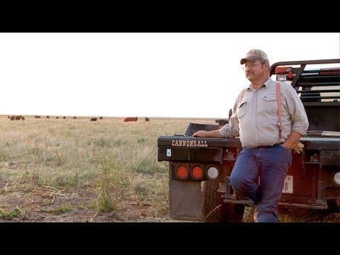Cattle Money Ball - 2 Bar Angus, Multiview's Good Company