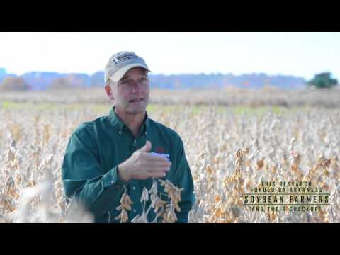 Field to Film: Featured Research |  Dr. Purcell Talks Achieving Maximum Yield Potential