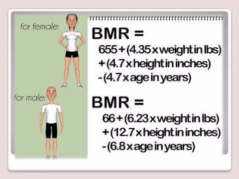 Online BMR Calculator