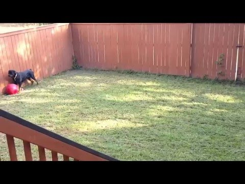 How to keep a dog busy