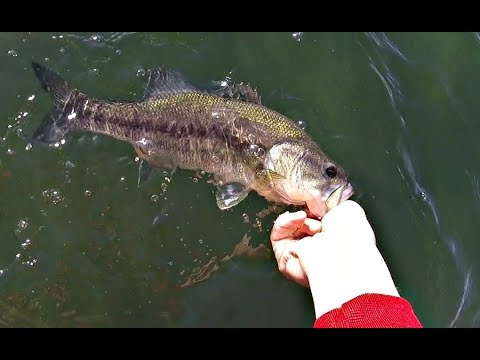 Winter POND BASS Fishing with MYSTERY TACKLE BOX(February)