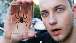 Real Spider Halloween Prank - Magic of Y