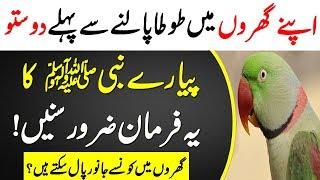 Prophet Muhammad About Parrot || Gar Min Tota Palna || Mithoo || Parindy Palna || Islamic Teacher