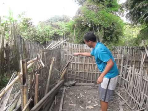 Jun breaking down a pig's house