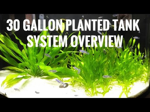 30 Gallon Planted - System Review