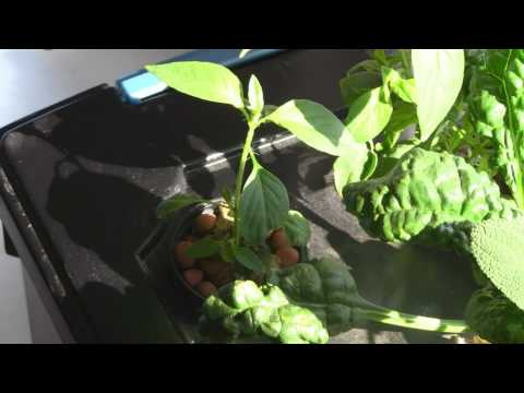 How To Build A Windowsill Hydroponic Herb Garden (Part 2 of 2)