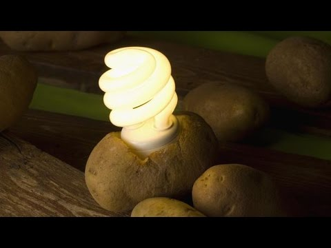 Make Electricity from Potatoes | Science News