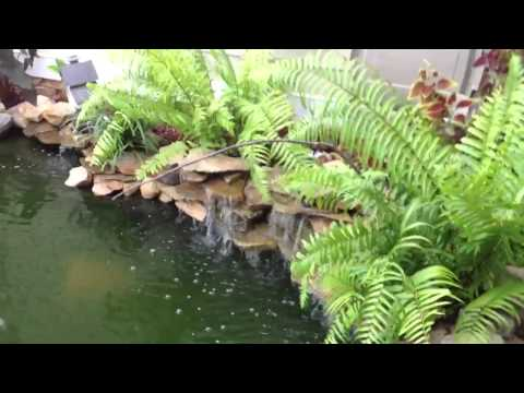 How to clear up my koi pond