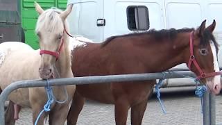 Końskie Targi W Pajęcznie, Maj 2018
