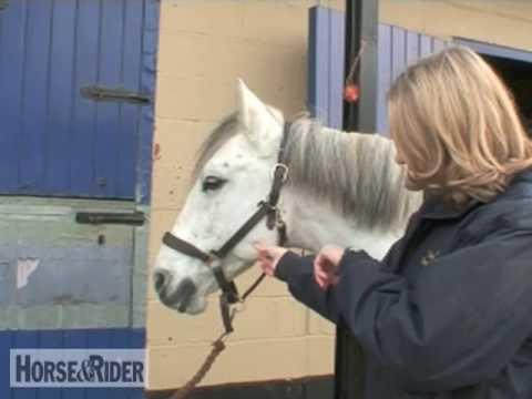 Taking a Jawline Pulse   HorseandRider UK