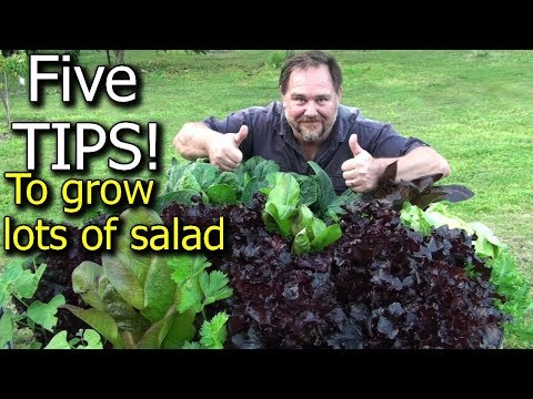 5 Tips How to Grow a Ton of Salad in Just One Raised Garden Bed or Container