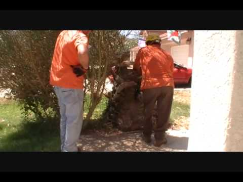 Palm Tree Removal by professionals