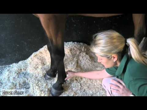 How to Take a Digital Pulse with Liphook Equine Hospital   HorseandRider UK