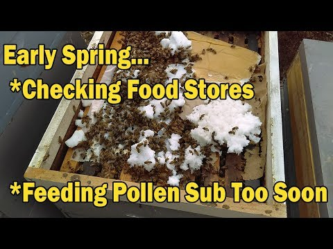Early Spring Can Kill Bees...Checking Food  Stores / Feeding Pollen Sub Too Soon