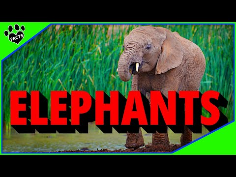 Animals Kids Love: Elephants 101: 10 Elephant Facts for Kids  - Animal Facts