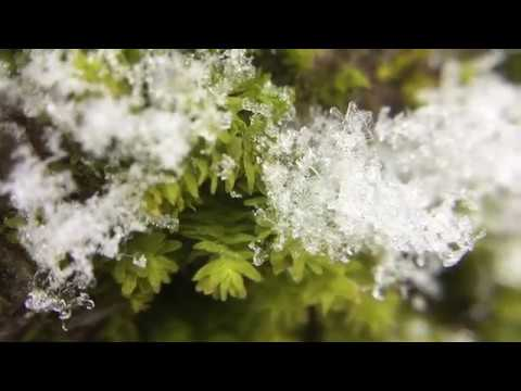 Snow on Spring Moss - Quiet Moments