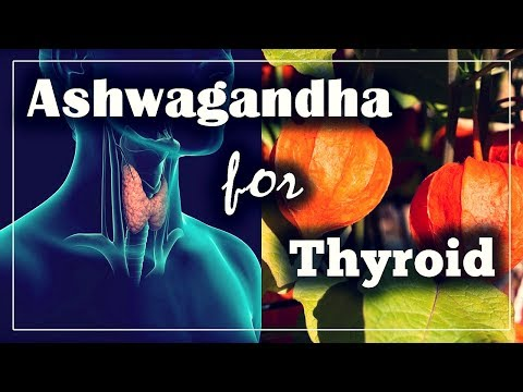 Ashwagandha and Thyroid: What are the benefits, and how to use it?
