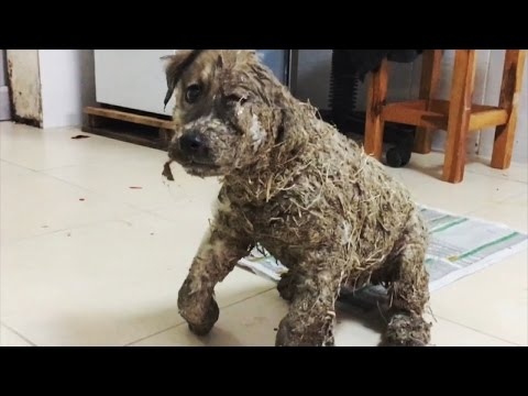 Puppy Covered In Glue Left For Dead By Children Makes Miraculous Recovery
