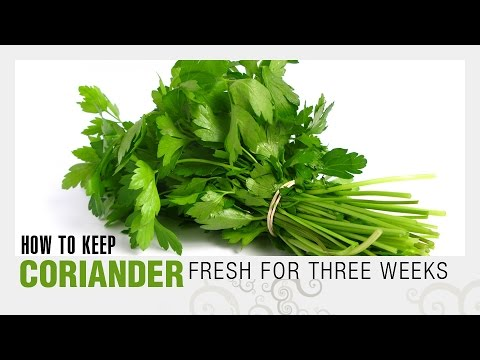How to Keep Coriander Leaves Fresh For Longer Time? | Easy and Simple TIPS | WOW Recipes