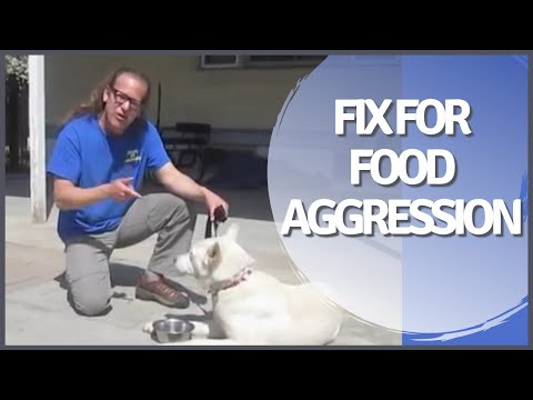 Food Aggression Resource Guarding Solid K9 Training