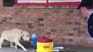Dog has sweet reaction to getting rescued from flooding
