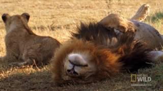 Топ-10 самых быстрых наземных животных
