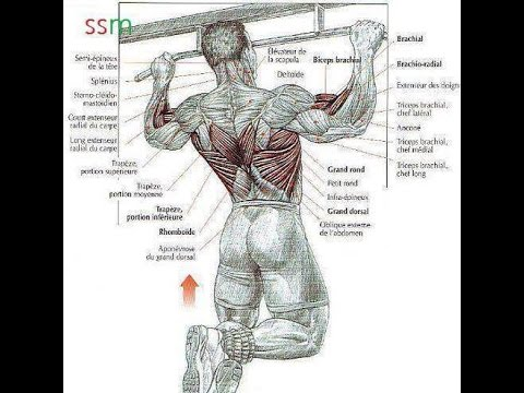 Bodybuilding Back Exercises -How To Build Your Back