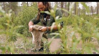 Supervivencia: Cómo cocinar un conejo en su propia piel. Vídeo blog de Maykol García