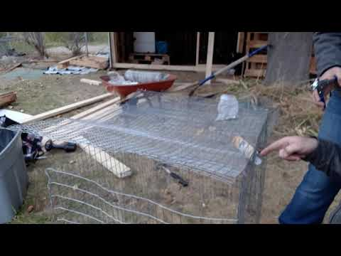 Building bunny cages.