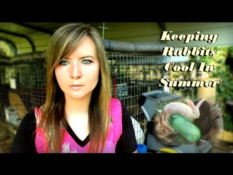 Tips For Keeping Rabbits Cool In Summer