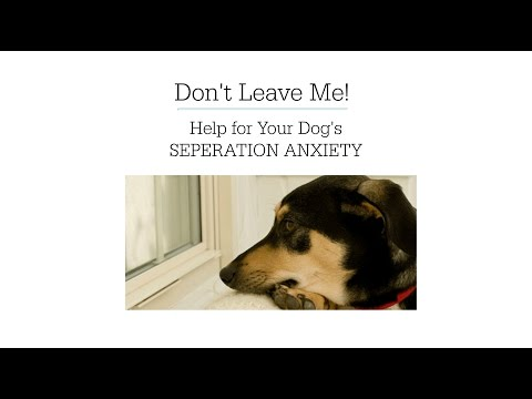 Separation Anxiety In Dogs Help | Tips On How To Cure A Dog Of Separation Anxiety