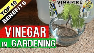VINEGAR in GARDENING - Top 10 Proven Benefits / Uses of Acetic Acid in Garden
