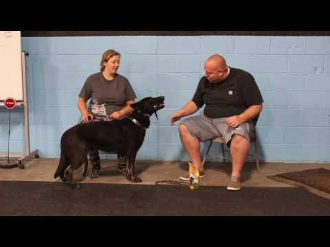 Dogs Who Serve- How to Train a Forced Fetch