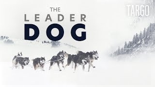 The Leader Dog - Inside one of the hardest sled dogs' race [VR/360]