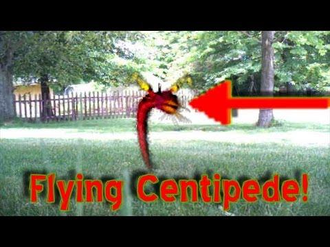 Flying Centipede Caught on tape