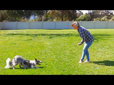 Todays training session working on 2 mins section of routine - Dog Tricks Training
