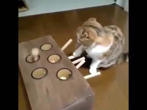 How to Keep your cat occupied!?